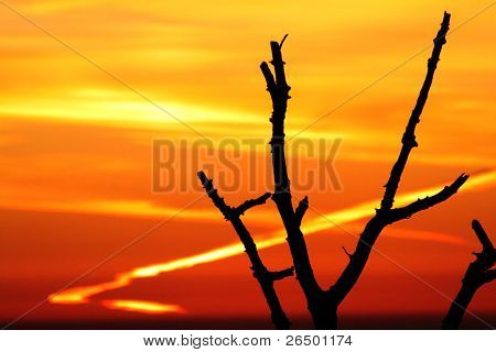 Burning sky with dark tree
