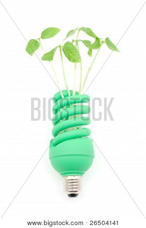 Sprout and light bulb