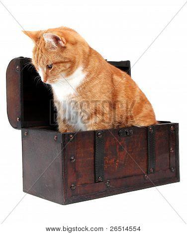 Inquisitive Tomcat In Chest