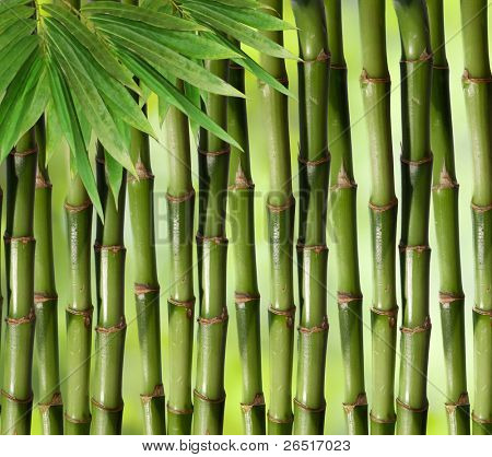 Bamboo green plant stems background with slight inward perspective over black