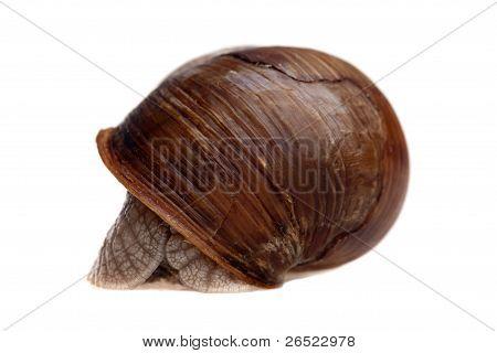 Hidden Snail