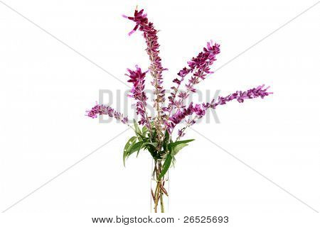 Fresh picked purple lavender flowers in a clear glass flower vase. isolated on white with room for your text