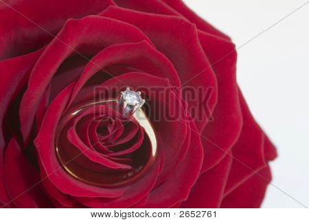 Engagement Rose