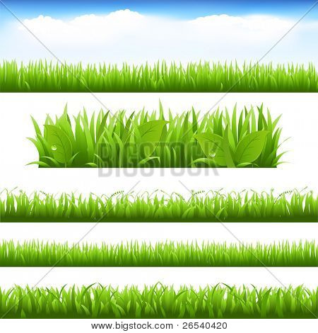 Green Grass And Leafs Set, Isolated On White Background, Vector Illustration