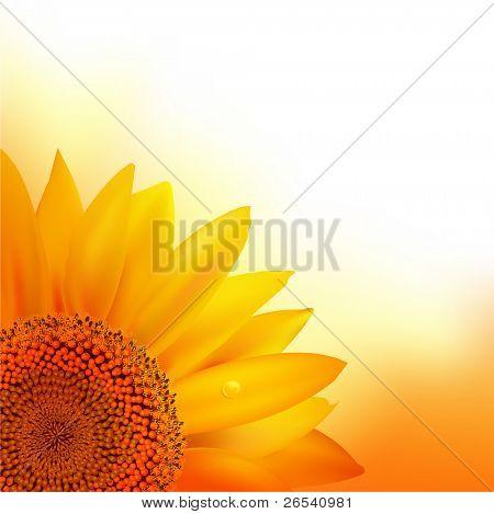 Sunflower, Vector Illustration