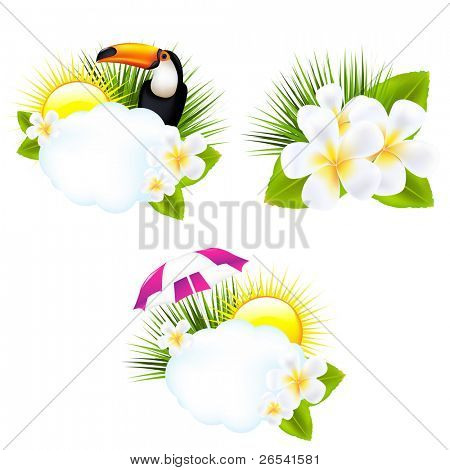 Tropical Illustrations, Isolated On White Background, Vector Illustration