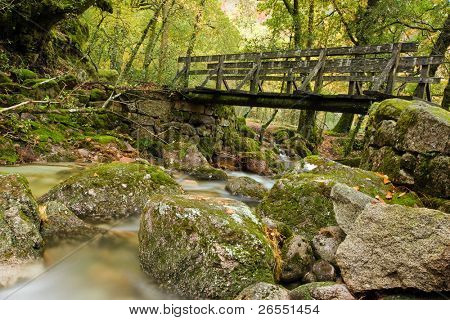 Autumn forest with wood bridge over creek in yellow maple forest at Geres National Park, Portugal