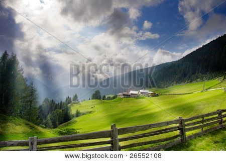 summer landscape.  Forrest and meadow