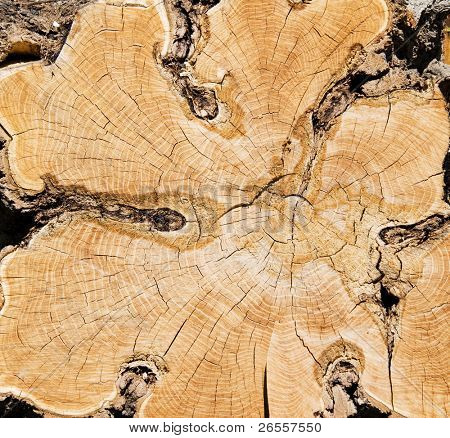 Background. close-up wooden cut texture