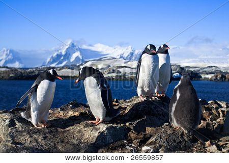 group of penguins on the rocks have a good time