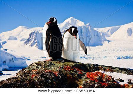 zwei Pinguine träumen sitzend auf einem Felsen, Berge im Hintergrund
