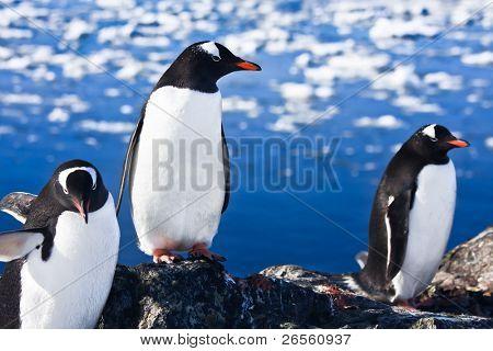 Grupo de pinguins, divertir-se nas montanhas nevadas da Antárctica