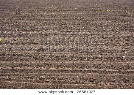 Fresh soil background closeup