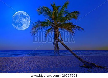 The moon shining in a deserted tropical beach at midnight with a coconut palm tree in the foreground