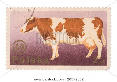 POLAND - CIRCA 1975: A postage stamp printed in the Poland shows image of a cow, circa 1975