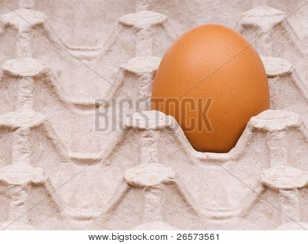 One brown egg in packing for eggs