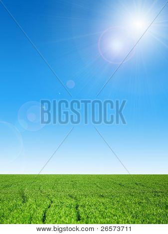 Field winter wheat on a spring field