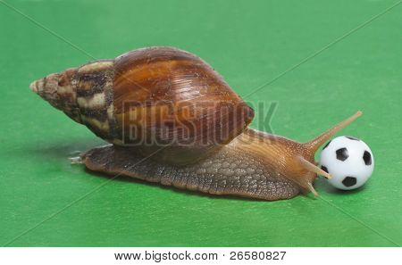 Big snail playing the soccer