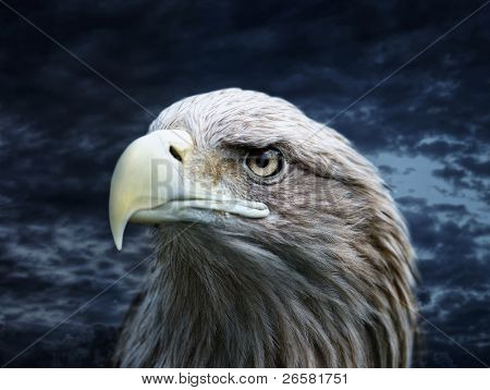 Eagle in the wild nature