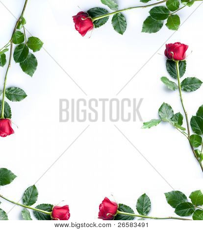 Frame of red roses on white background