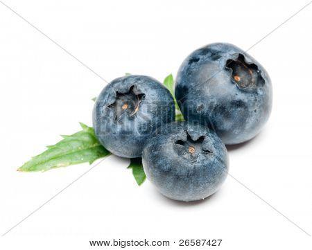 isolated blueberry
