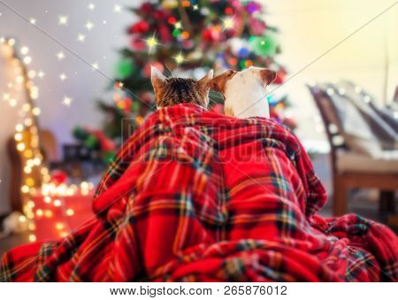 poster of Cat and dog under a christmas tree. Pets sitting backs and looking at the Christmas tree