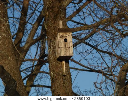 Bird-house In Spring