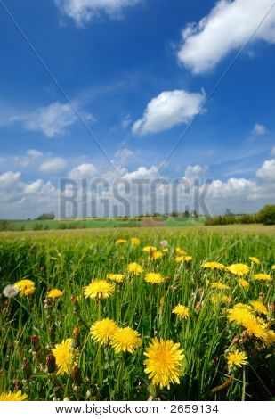Yellow Flowers And Blue Cloudy Sky