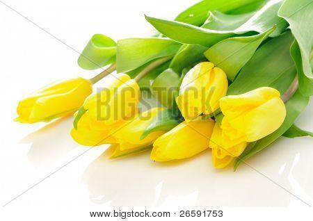 Buquê das tulipas frescas sobre branco