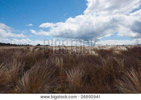 Planícies de touceira varridas pelo vento.