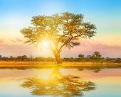 African Tree At Sunrise Reflected On A Pond. Serengeti Wildlife Area In Tanzania, East Africa. Afric poster