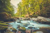 Beautiful River In Forest Nature. Peaceful Toned Nature Background. Relaxing Forest Landscape, Artis poster