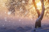 Christmas Nature With Snowflakes. Winter. Bright Sunshine In Foggy Frosty Morning At Sunrise. Xmas B poster