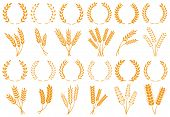 Wheat Or Barley Ears. Harvest Wheat Grain, Growth Rice Stalk And Bread Grains Isolated Vector Set poster