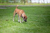 Homeless Dog,stray Dog,vagrant Dog In Thailand,stray Dog Look Forward With Sad Eyes poster