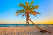 stock photo of beach sunset  - A coconut tree on a deserted tropical beach at sunset - JPG