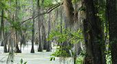 image of bayou  - Black Bayou Lake - JPG