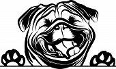 Animal Dog Pug Vex5Tb Peeking.eps poster