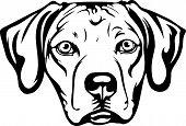 Animal Dog Rhodesian Ridgeback Labador 6T6Vg.eps poster