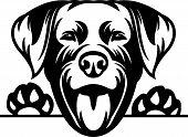 Animal Dog Rottweiler 6Y6 Peeking.eps poster