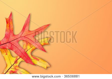 Two colorful red, yellow and orange fall leaves on a decorative background.  For use to place copy on the blank areas of the image for seasonal inferences.