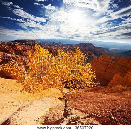 Bryce canyon in fall season
