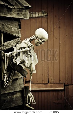 Halloween Skeleton Profile