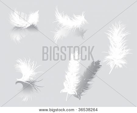 illustration with white feathers isolated on gray background