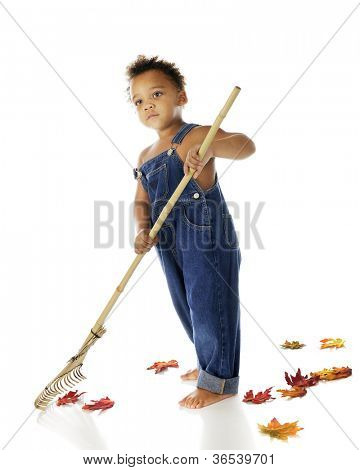 An adorable biracial tot only in overalls, raking up fallen autumn leaves.  On a white background.