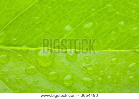 A Photo Macro Of Leaf Green