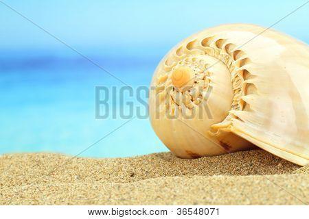 Gastropod shell on the beach