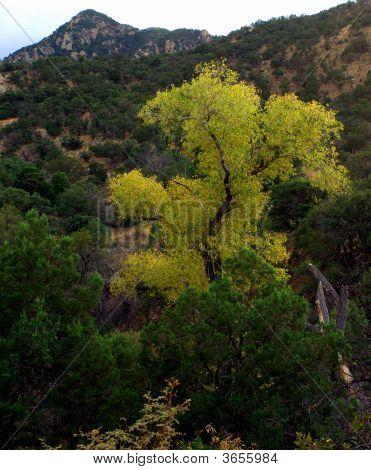 Overlooking Madera Canyon