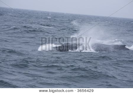 Whale Blow
