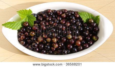 Fresh Blackcurrents